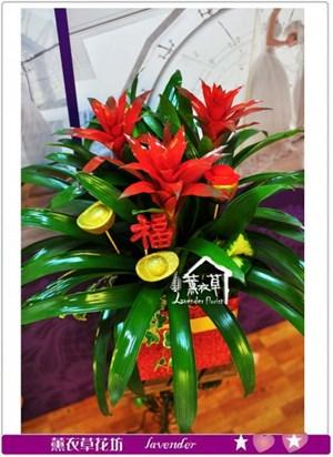 鳳梨花盆栽~新年款c122906