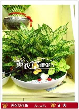 翡翠組合盆栽y20229