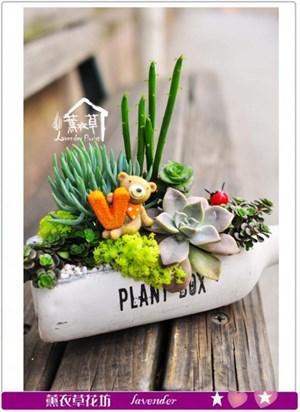 多肉植物~酒瓶設計b030707