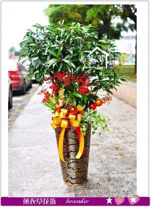黃金萬兩盆栽~新年款b010506