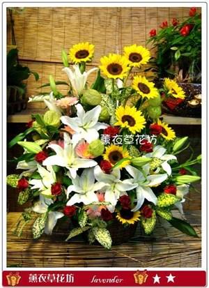 向日葵盆花F558