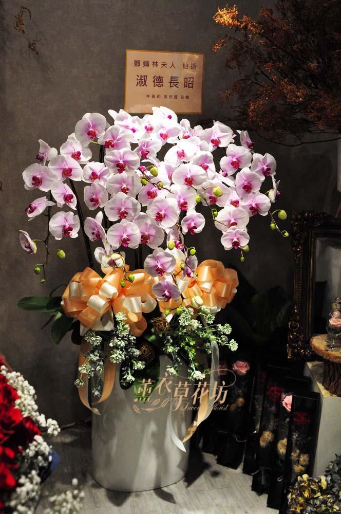 高雅蝴蝶蘭設計1盆108120506