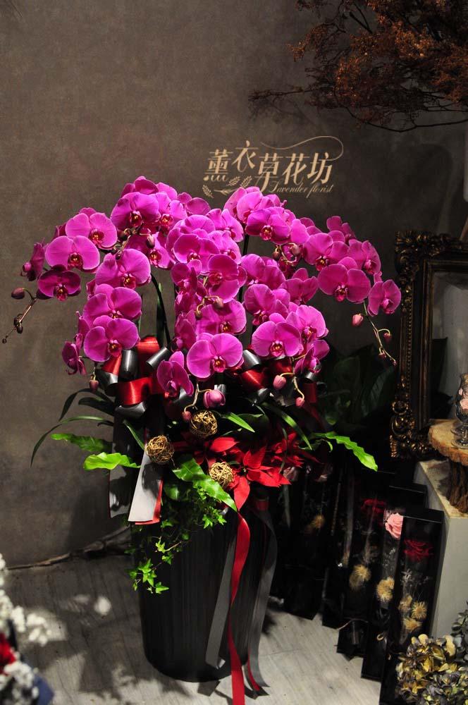 高雅蝴蝶蘭設計108120509