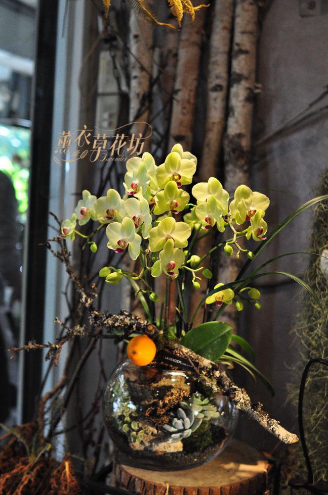 黃金蝴蝶蘭&多肉&玻璃缸設計109010203