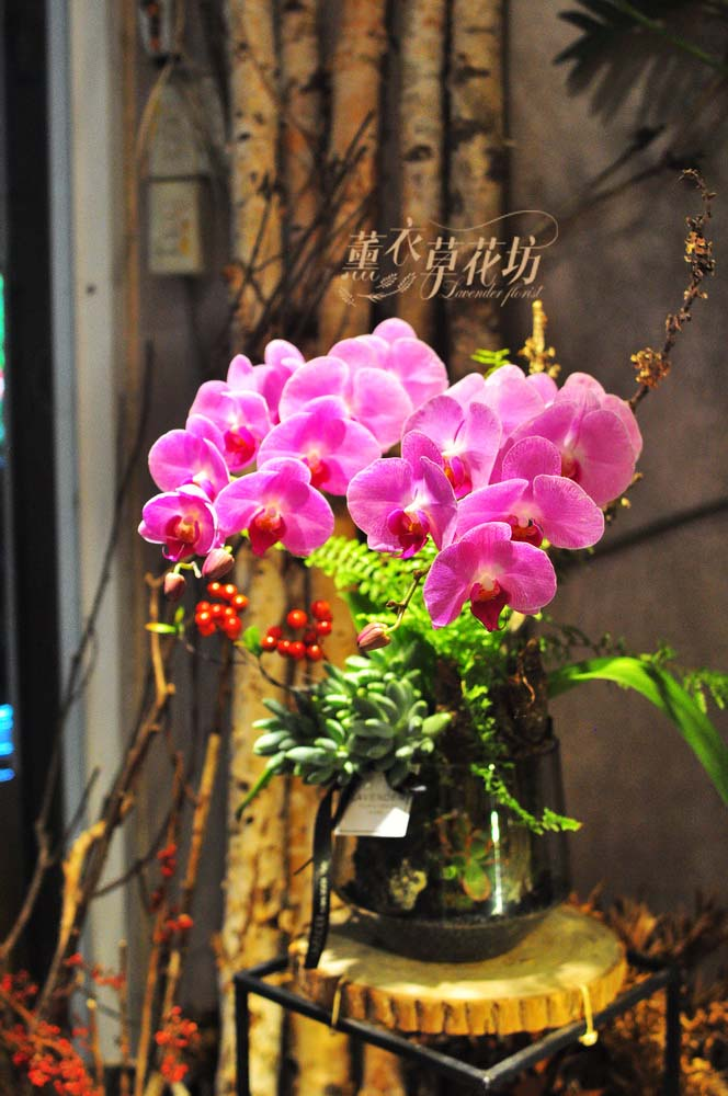 蝴蝶蘭&玻璃設計108052113