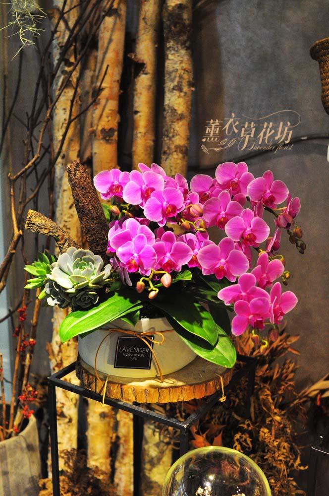 高雅蝴蝶蘭設計108050610