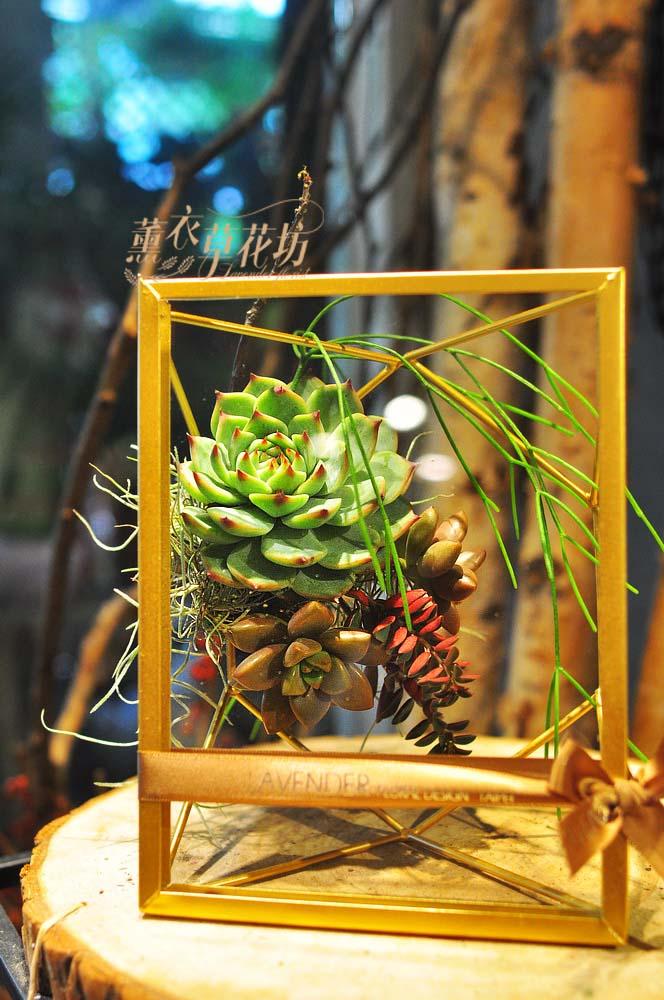 多肉植物&金屬框設計108042210