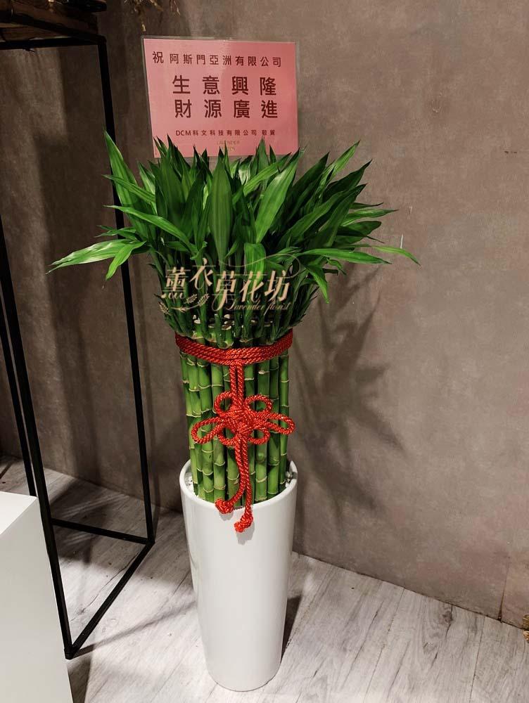 開運竹盆栽 106100418