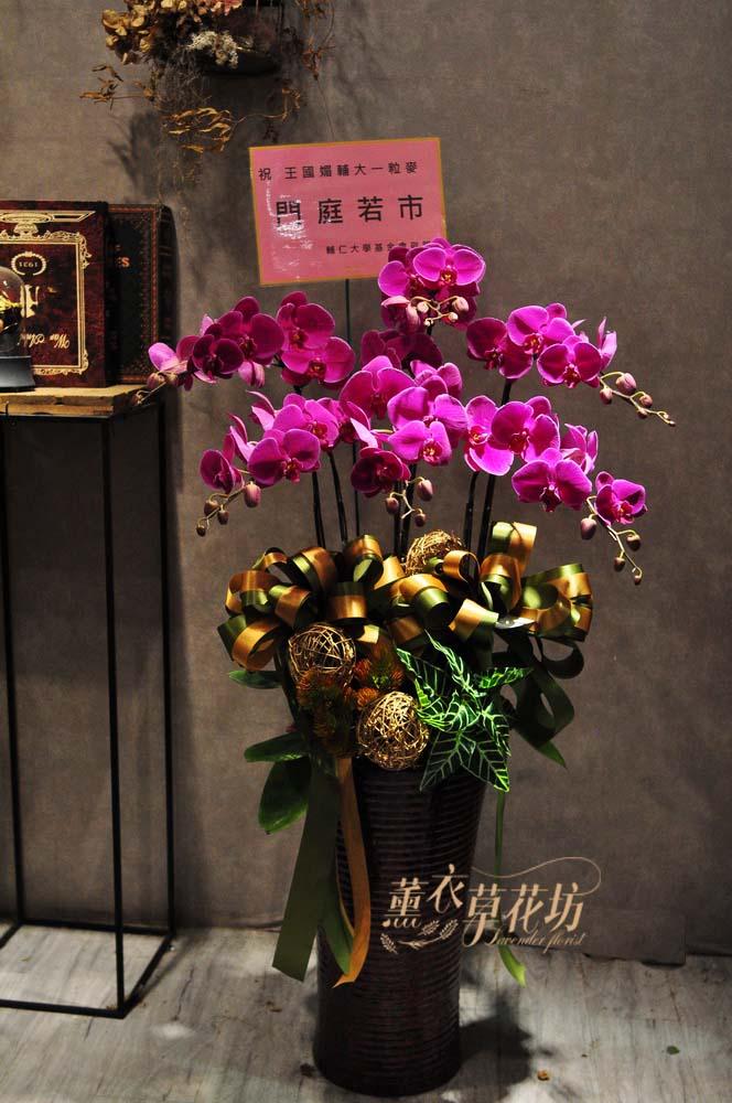 高雅蝴蝶蘭 6株106091903