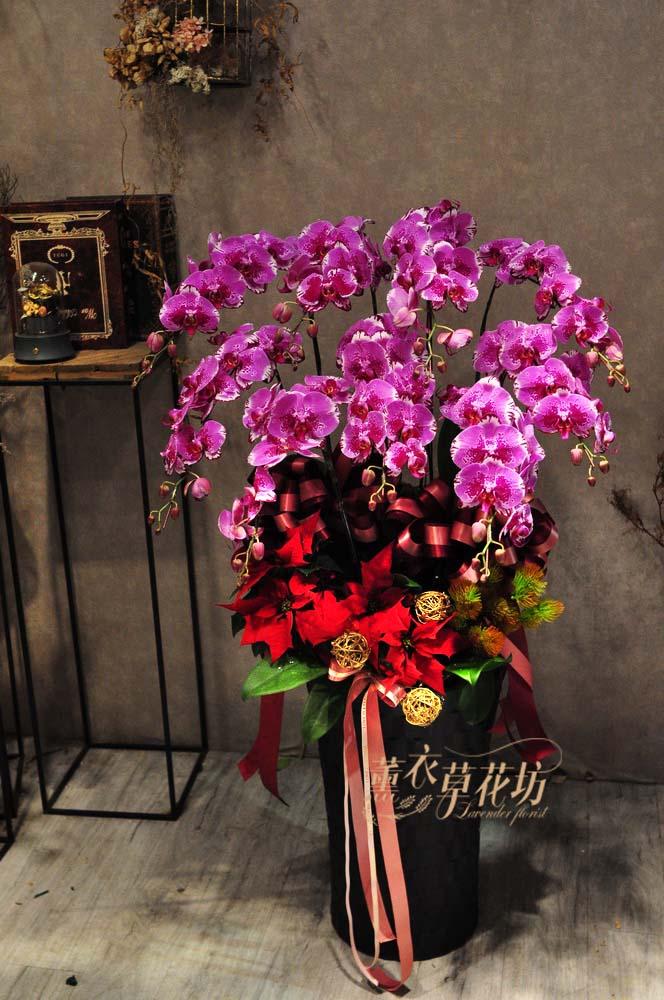 高雅蝴蝶蘭設計108110604