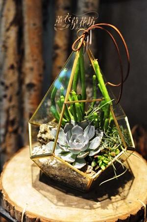 多肉植物設計~玻璃款 B082502