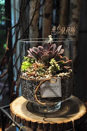 多肉植物&玻璃缸設計a110517