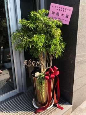 富貴樹盆栽 108061516