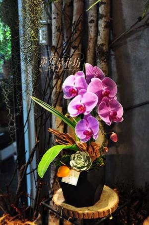 蝴蝶蘭設計106011507