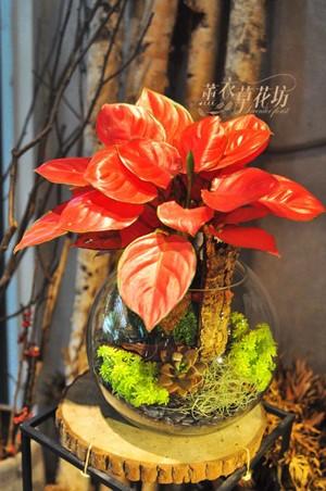 粉黛葉盆栽設計 108042507
