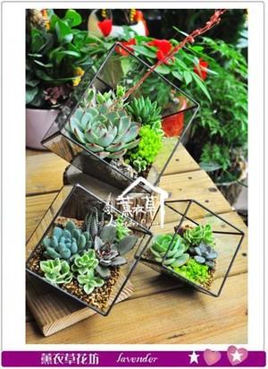 水立方立體玻璃&多肉設計(中) 107042005