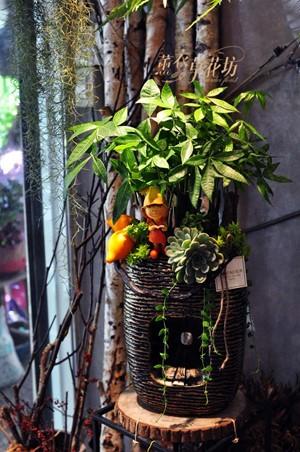 發財樹盆栽c111506