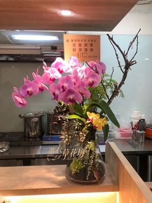 高雅蝴蝶蘭/蘭花/108052804