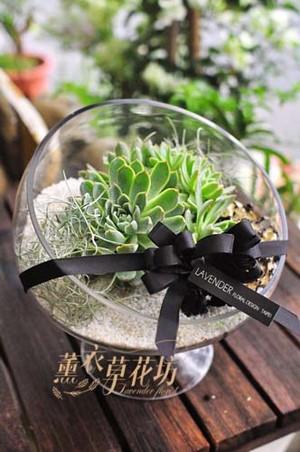紫羅蘭女王~多肉植物設計 107092711