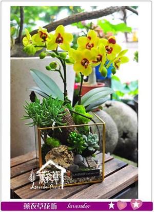 蝴蝶蘭&多肉植物& 玻璃缸設計107053008