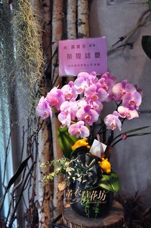 蝴蝶蘭/蘭花設計 107062805