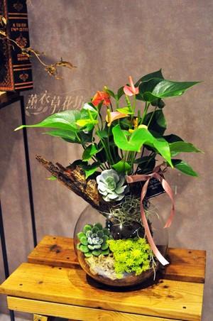 迷你火鶴&多肉植物&玻璃缸設計 108042301